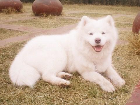 宠物狗狗品种大全图片大全 这是什么狗狗啊
